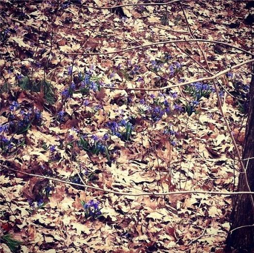 Evidence of spring - finally!